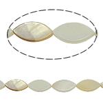Beads Natyrore White Shell, Syri kali, asnjë, e bardhë, 8x15x3mm, : 2mm, :15.5Inç, 25PC/Fije floku,  15.5Inç,