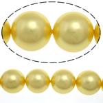 Detit të Jugut Beads Shell, Jug Deti Shell, Round, asnjë, ar, 16mm, : 1mm, :16Inç, 25PC/Fije floku,  16Inç,