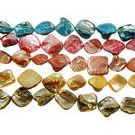 Beads Natyrore Colored Shell, Predhë, Shape përziera, i lyer, ngjyra të përziera, 17-20mm, : 1.5mm, :15.5Inç, 10Fillesat/Qese,  Qese