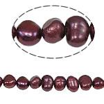 Barok Beads kulturuar Pearl ujërave të ëmbla, Pearl kulturuar ujërave të ëmbla, 5-6mm, : 0.8mm, :14Inç,  14Inç,