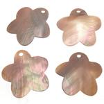 Pendants Shell, Predhë, Lule, 33-35x33-34x1-1.5mm, : 3mm, 50PC/Qese,  Qese