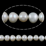 Barok Beads kulturuar Pearl ujërave të ëmbla, Pearl kulturuar ujërave të ëmbla, e bardhë, AAA, 10-11mm, : 1mm, :15.5Inç,  15.5Inç,