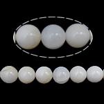 Beads Giant molusqe, Melodik Giant, Round, sintetik, i tejdukshëm, e bardhë, 6mm, : 1mm, : 16Inç, 10Fillesat/Shumë,  Shumë
