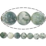 Beads agat Tree, Tree agat, Round, 14mm, : 1.2mm, :15.5Inç, 5Fillesat/Shumë,  Shumë