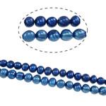 Round Beads kulturuar Pearl ujërave të ëmbla, Pearl kulturuar ujërave të ëmbla, i lyer, blu, Një, 8-9mm, : 0.8mm, : 15Inç,  15Inç,