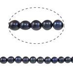 Barok Beads kulturuar Pearl ujërave të ëmbla, Pearl kulturuar ujërave të ëmbla, Round, asnjë, e zezë, 10-11mm, : 0.8mm, :15Inç,  15Inç,