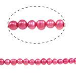 Barok Beads kulturuar Pearl ujërave të ëmbla, Pearl kulturuar ujërave të ëmbla, Oval, i lyer, Pink fuchsia, 6-7mm, : 0.8mm, :15Inç,  15Inç,