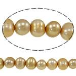 Barok Beads kulturuar Pearl ujërave të ëmbla, Pearl kulturuar ujërave të ëmbla, Oval, i lyer, mineral verdhë, 7-8mm, : 0.8mm, :14.7Inç,  14.7Inç,