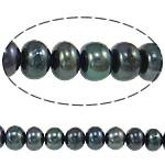 Button Beads ujërave të ëmbla kulturuar Pearl, Pearl kulturuar ujërave të ëmbla, Rondelle, asnjë, blu e zezë, 5-6mm, : 0.8mm, :15Inç,  15Inç,