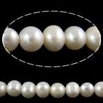 Round Beads kulturuar Pearl ujërave të ëmbla, Pearl kulturuar ujërave të ëmbla, asnjë, e bardhë, Një, 10-11mm, : 1.5mm, : 15.7Inç,  15.7Inç,