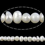 Barok Beads kulturuar Pearl ujërave të ëmbla, Pearl kulturuar ujërave të ëmbla, Oval, asnjë, e bardhë, 2-3mm, : 0.8mm, :15Inç,  15Inç,