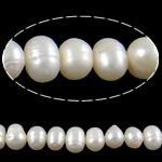 Barok Beads kulturuar Pearl ujërave të ëmbla, Pearl kulturuar ujërave të ëmbla, Oval, natyror, e bardhë, 8-9mm, : 0.8mm, :15Inç,  15Inç,