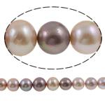 Kulturuar ujërave të ëmbla Pearl Nucleated Beads, Pearl ujërave të ëmbla kulturuar Nucleated, Round, natyror, ngjyra të përziera, 12-16mm, : 1mm, :15.7Inç,  15.7Inç,