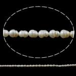 Rajs Beads ujërave të ëmbla kulturuar Pearl, Pearl kulturuar ujërave të ëmbla, Oriz, natyror, e bardhë, Një, 3-4mm, : 1mm, : 14Inç,  14Inç,