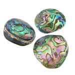 Pendants Natyrore predhë guaskë, Shell Guaskë, asnjë, asnjë, asnjë, 34-36x28-36x9-8mm, : 3mm, 20PC/Shumë,  Shumë