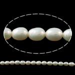 Rajs Beads ujërave të ëmbla kulturuar Pearl, Pearl kulturuar ujërave të ëmbla, Oriz, natyror, e bardhë, 5-6mm, : 0.8-1mm, : 15Inç,  15Inç,