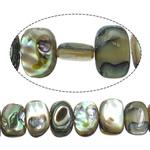 Beads predhë guaskë, Shell Guaskë, Drejtkëndësh, asnjë, asnjë, asnjë, 7-8x11-12x4mm, : 1mm, :16Inç, 5Fillesat/Shumë,  Shumë