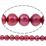 Button Beads ujërave të ëmbla kulturuar Pearl, Pearl kulturuar ujërave të ëmbla, Buton, i lyer, kuqe purplish, 10-11mm, : 0.8mm, : 14.5Inç,  14.5Inç,