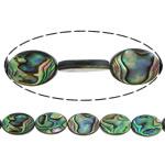 Beads predhë guaskë, Shell Guaskë, Oval Flat, asnjë, asnjë, asnjë, 18x13x4mm, : 1.5mm, :16Inç, 3Fillesat/Shumë, 22 Pcs/Strand,  Shumë