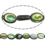 Beads predhë guaskë, Shell Guaskë, Oval Flat, asnjë, asnjë, asnjë, 8x6x3mm, : 1.5mm, :16Inç, 5Fillesat/Shumë, 53 Pcs/Strand,  Shumë