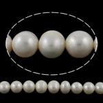 Pearl kulturuar ujërave të ëmbla, Patate, natyror, e bardhë, 10-11mm, : 0.8mm, : 14.5Inç,  14.5Inç,