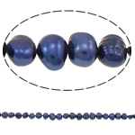 Barock kultivierten Süßwassersee Perlen, Natürliche kultivierte Süßwasserperlen, tiefblau, 5-6mm, Bohrung:ca. 0.8mm, verkauft per 15 ZollInch Strang