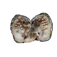 Süßwasser kultivierte Liebe wünschen Perlenaustern, Perlen, 5-7mm, verkauft von PC
