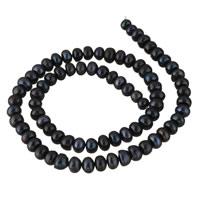 Button kultivierte Süßwasserperlen, Natürliche kultivierte Süßwasserperlen, Knopf, schwarz, 6-7mm, Bohrung:ca. 0.8mm, verkauft per ca. 14.5 ZollInch Strang