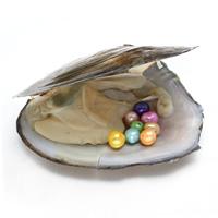 Süßwasser kultivierte Liebe wünschen Perlenaustern, Perlen, keine, 6-7mm, Bohrung:ca. 0.8mm, verkauft von PC