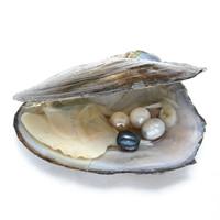 Süßwasser kultivierte Liebe wünschen Perlenaustern, Perlen, Reis, keine, 8-9mm, Bohrung:ca. 0.8mm, verkauft von PC
