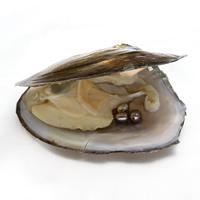 Süßwasser kultivierte Liebe wünschen Perlenaustern, Perlen, Reis, 6-7mm, Bohrung:ca. 0.8mm, verkauft von PC